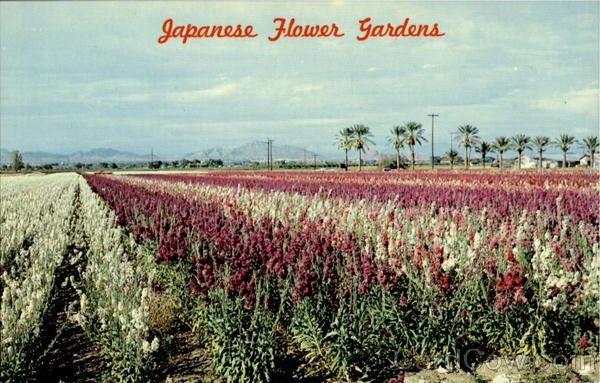 A postcard of the flower fields.